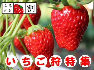 ichigo_00.png